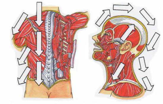 3Dリフトフェイシャルによる体の流れイメージ